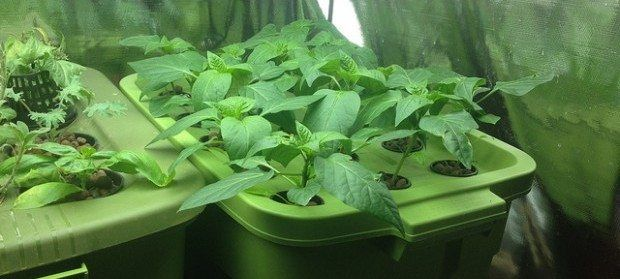 hydroponics grow room