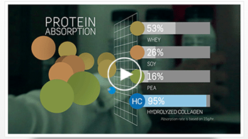 Protein Absorption