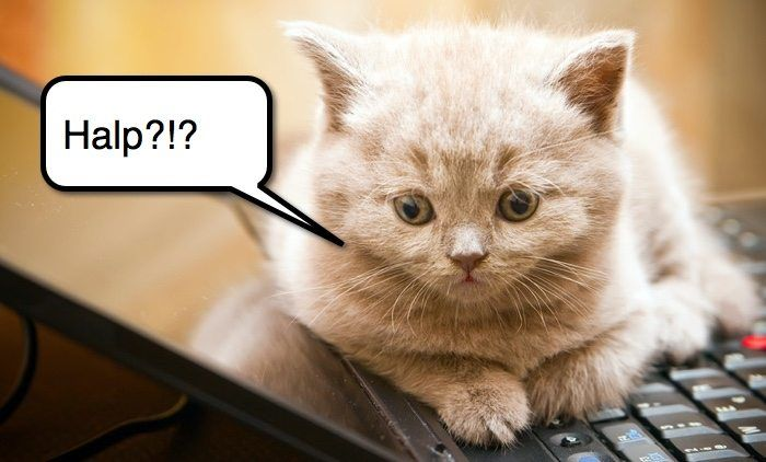 newbie kitten website help