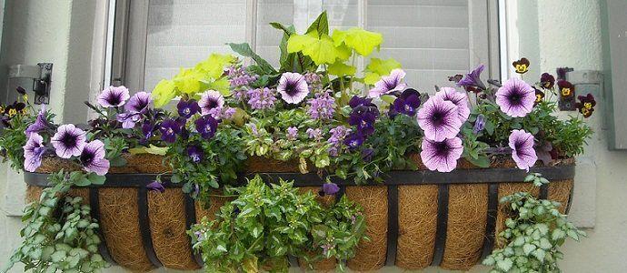 Floral Garden Window Box