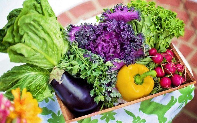 A basket of organic vegetables