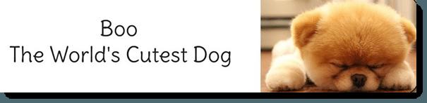 World's Cutest Dog