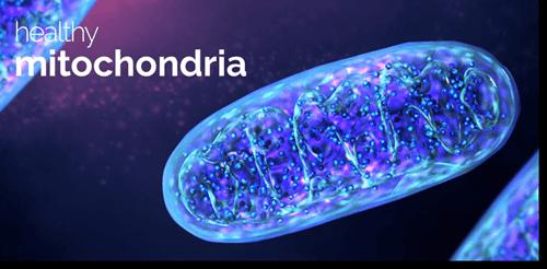 Healthy Mitochondria