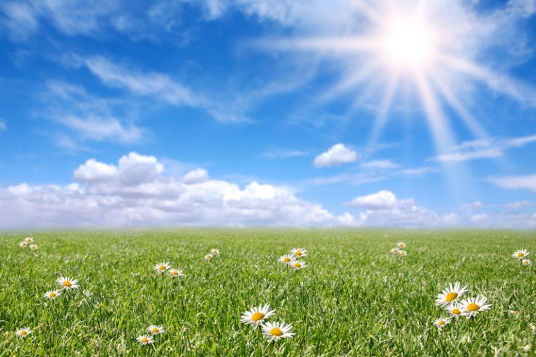Photograph of a green field with daisies under a bright blue sky.