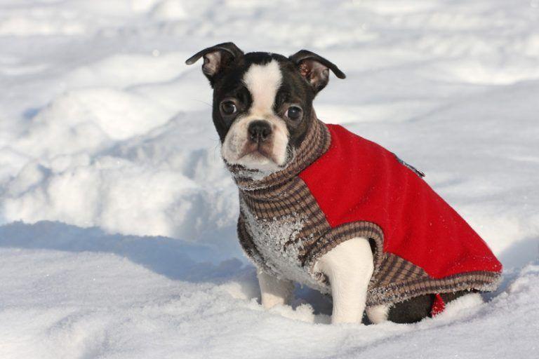 Top 10 Pet Affiliate Programs