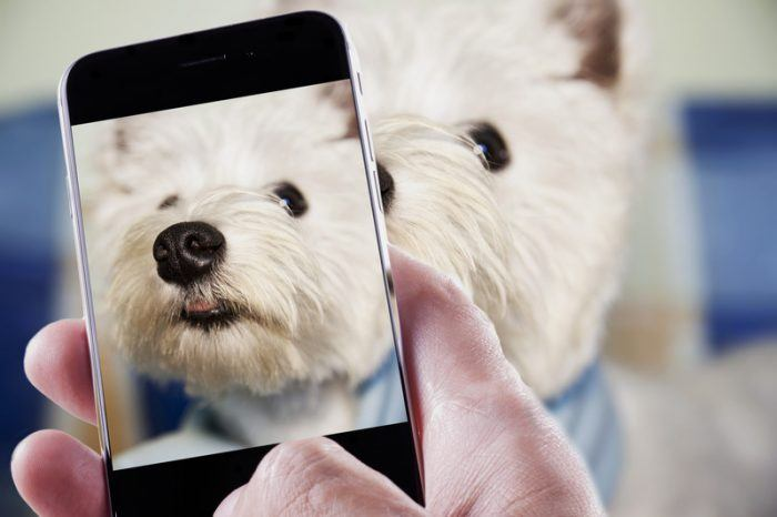 photo of a small white dog on a smartphone representing dog affiliate programs