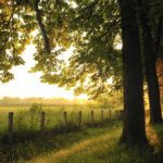 tree lined old road with a cowboy fence and sunlight