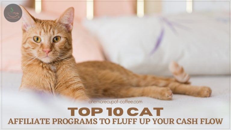 Top 10 Cat Affiliate Programs To Fluff Up Your Cash Flow featured image