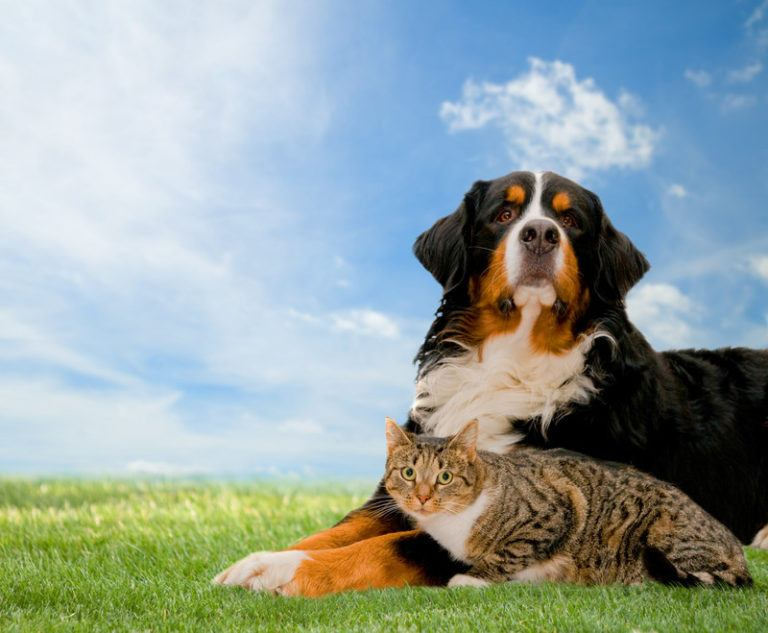 This image is a photo of a black, white, and brown dog and a gray and white cat sitting together on a wide lawn beneath a blue sky with white clouds, representing the best pet insurance affiliate programs.