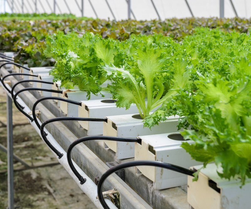 This is an image of an aquaponics system, including leafy greens growing out of rows of white tanks with black hoses attached to the tanks at the end of each row, representing the best aquaponics affiliate programs.