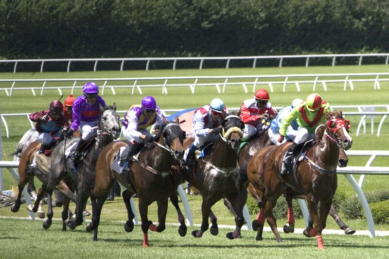 This is a photo of a horse race in which seven horses with jockeys are dashing down a green race track, representing the best bookmaker affiliate programs.