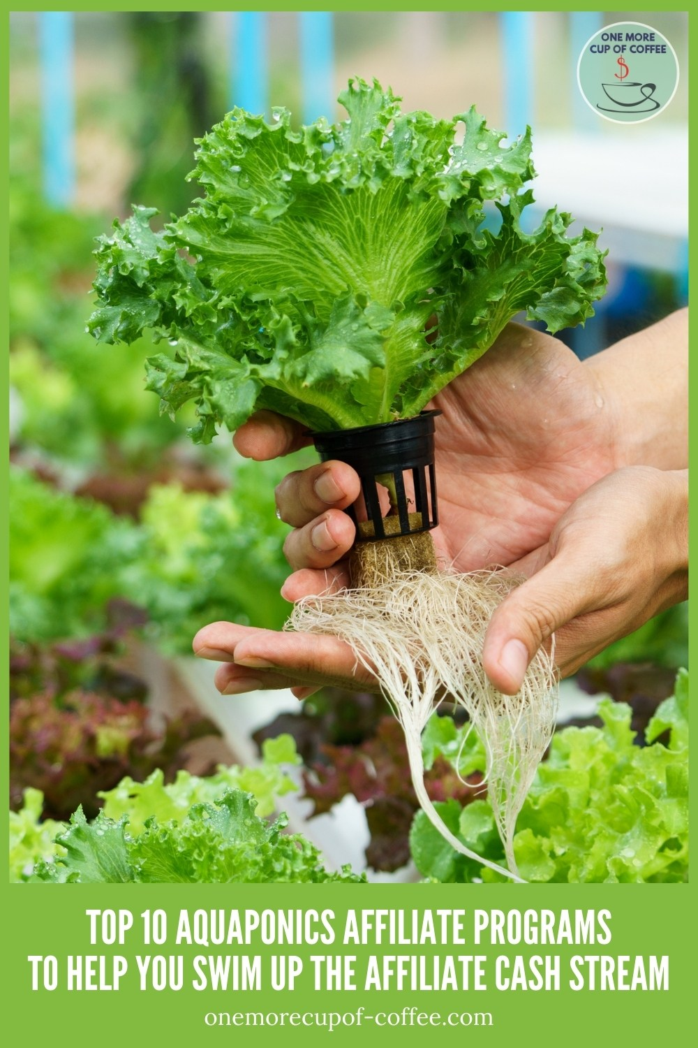 """closeup image of a green vegetable in aquaponics, with text at the bottom """"Top 10 Aquaponics Affiliate Programs To Help You Swim Up The Affiliate Cash Stream'"""