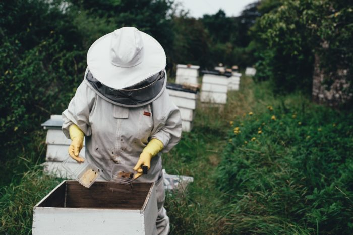 Make Money Keeping Bees