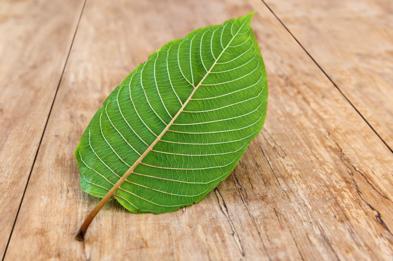 This photo shows a single green Kratom leaf in the middle of a rustic wooden table, representing the best Kratom affiliate programs.