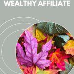 november 2019 inside wealthy affiliate