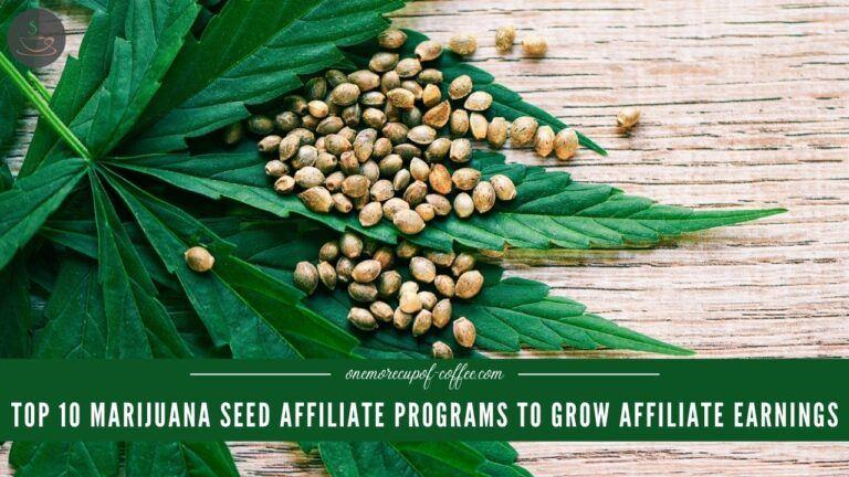 Top 10 Marijuana Seed Affiliate Programs To Grow Affiliate Earnings featured image