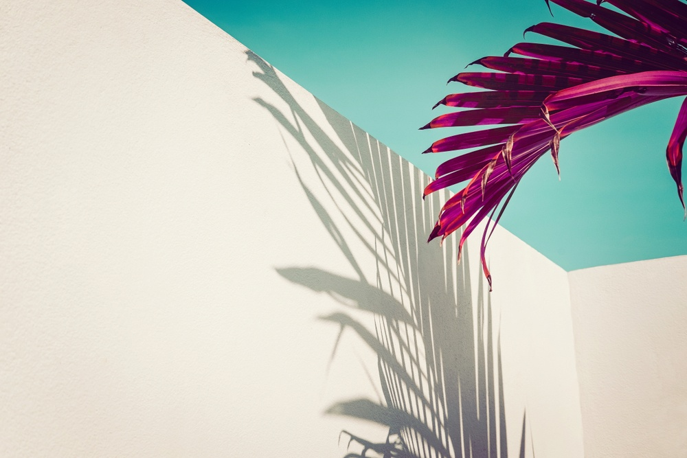 artistic photo of purple palm tree in souther california