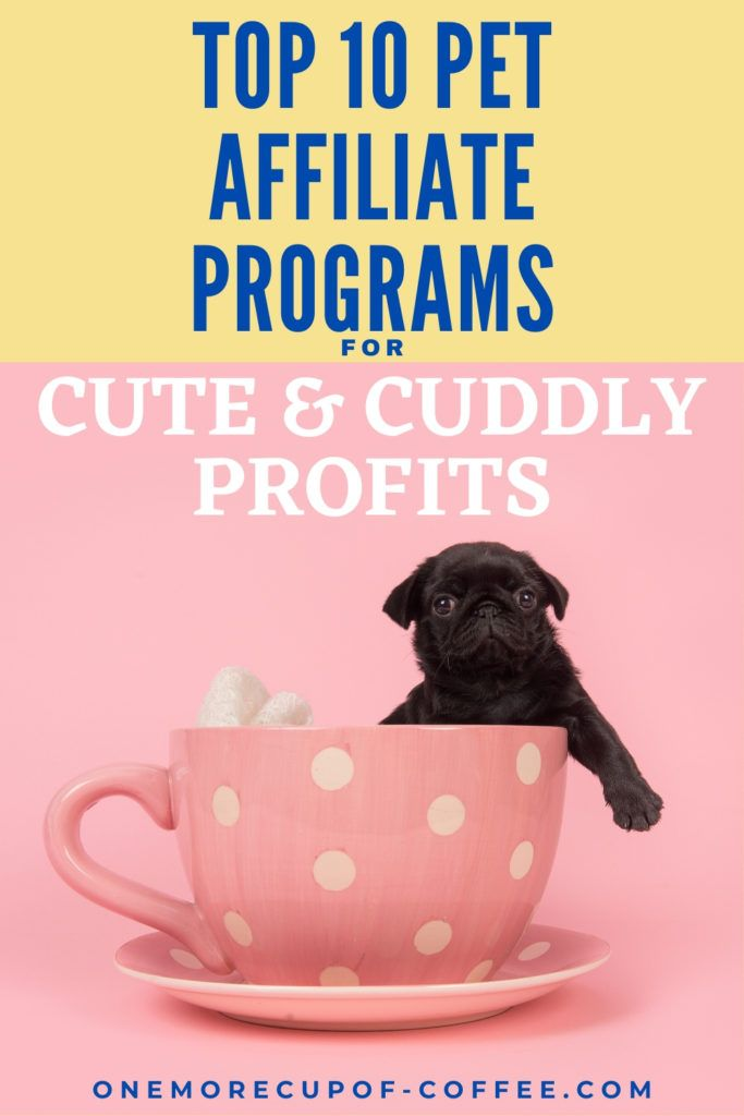 """pug in a big pink cup with """"Top 10 Pet Affiliate Programs For Cute & Cuddly Profits"""" text overlay"""