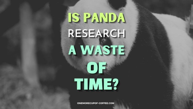 Is Panda Research A Waste Of Time Featured Image