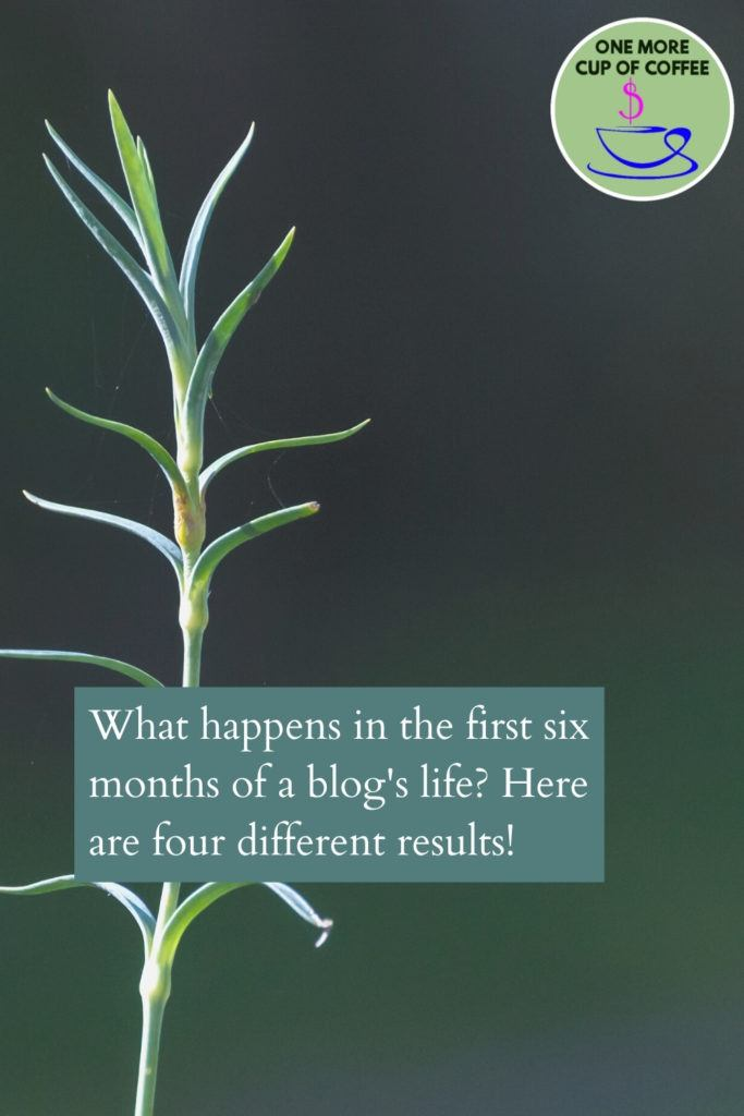 green seedling plant to represent the first six months of a growing a new blog