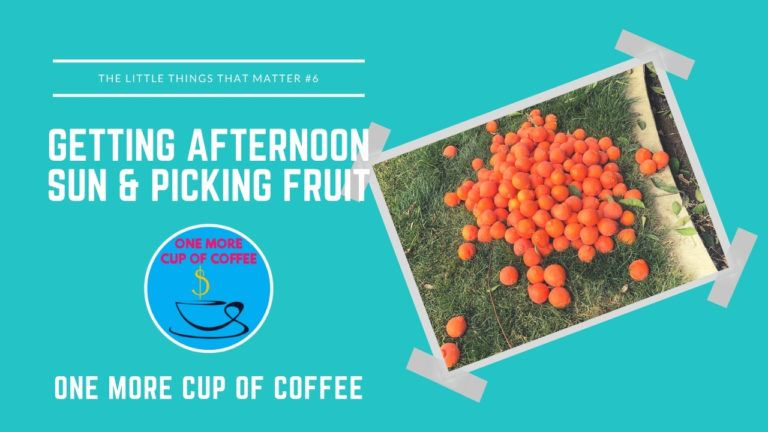Getting Afternoon Sun & Picking Fruit Featured Image _ Little Things That Matter Featured Image