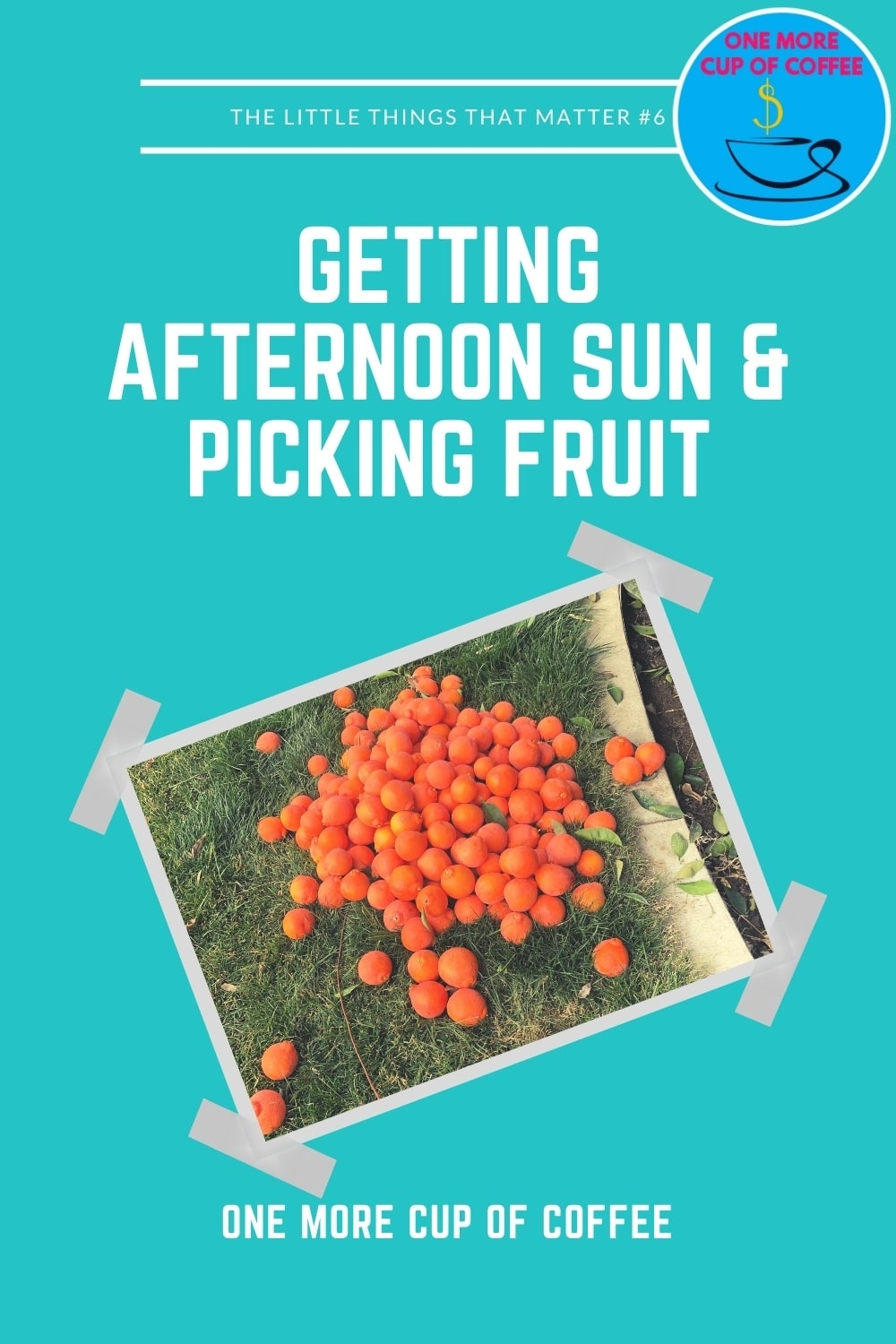Getting-Afternoon-Sun-Picking-Fruit-_-Little-Things-That-Matter