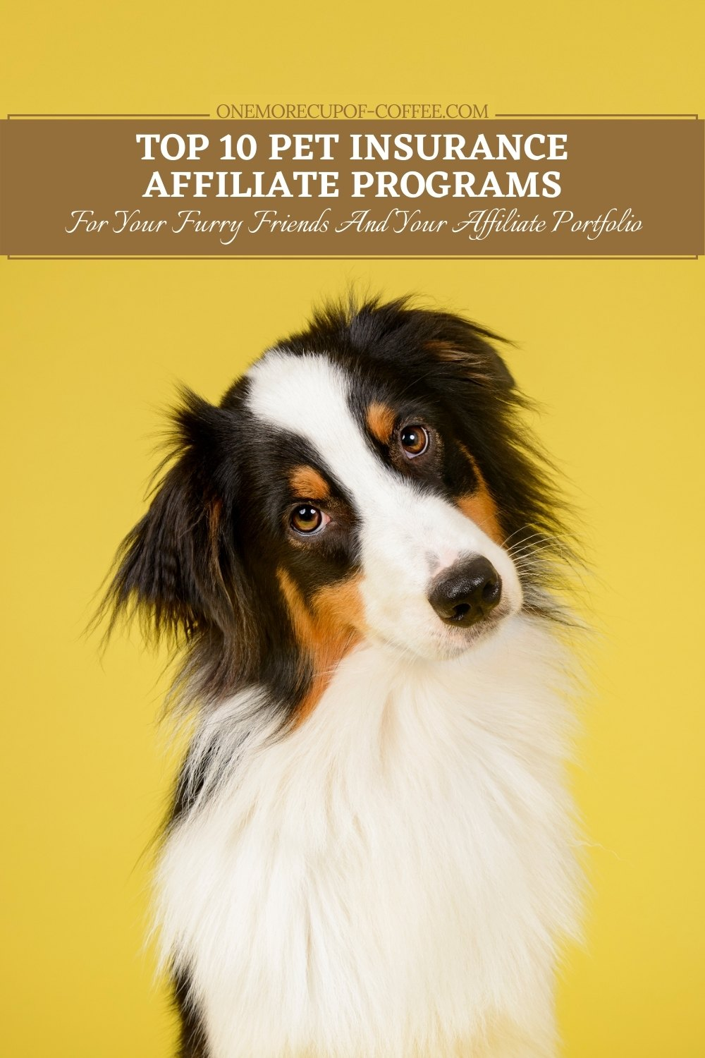 closeup image of a collie dog against a yellow background with text overlay
