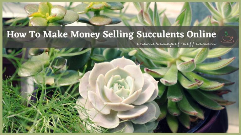 How To Make Money Selling Succulents Online featured image